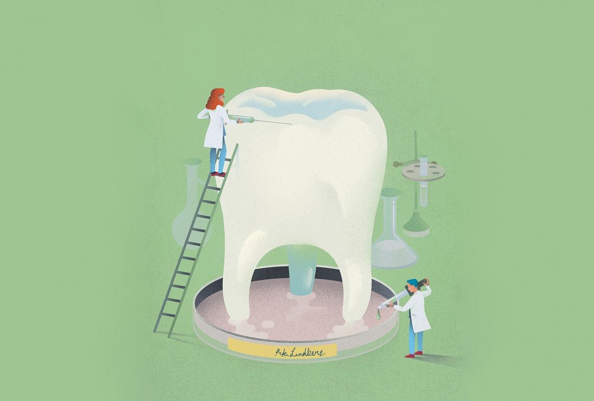Om 50 år odlar vi fram nya tänder