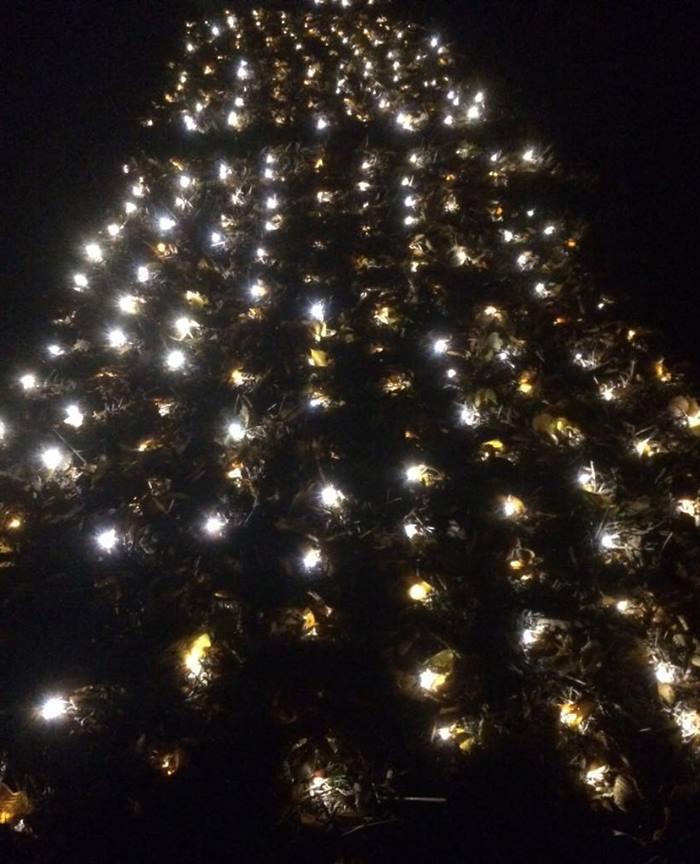 Hela slottsparken i levande ljus på Sofiero.