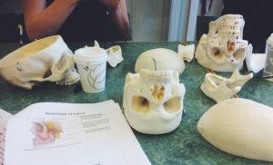 Anatomistudier